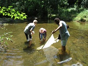 Knee Deep in the Creek at Norristown Farm Park 2.jpg
